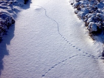 Tracks on the pristine WHW