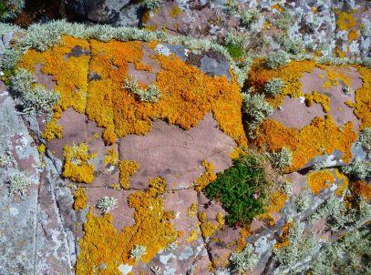 Dried moss