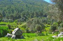 Lone tomb