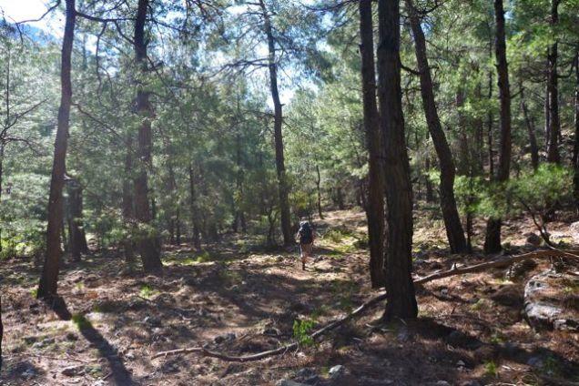 Woods after Bel