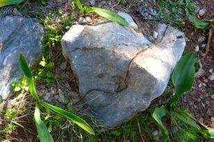 Caterpillar chain
