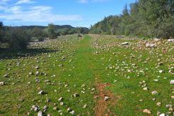 Cleared path - a rarity