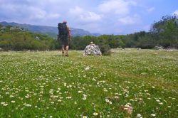 Daisy meadows